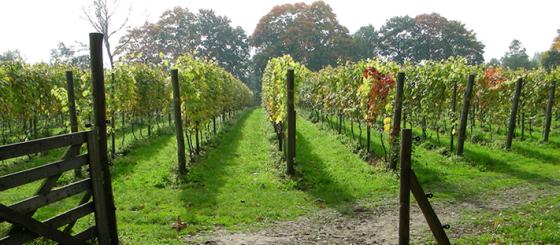 wijngaardoverzicht